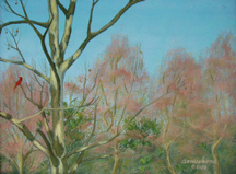 A cardinal sits in a bare sycamore tree as red maples buds swell
