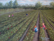 The Perfect Pick at Lewis Farms strawberry U-Pick Wilmington, NC